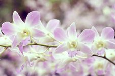 Free White And Violette Orchids Stock Photo - 20135480