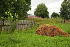 Free In The Russian Countryside In The Summer Stock Photo - 20135890