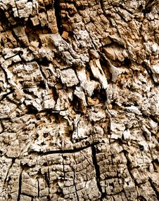 Free Texture Of Cracks On Wood Stock Photography - 20135892