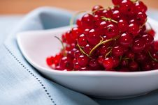 Free Red Currant Royalty Free Stock Images - 20136449