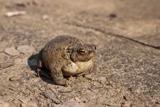 Free Frog Stock Photography - 20136782