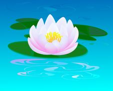 Free Pink Water Lily Stock Photography - 20136862