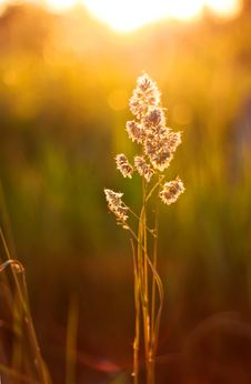 Free Sunset Plant Stock Images - 20137924