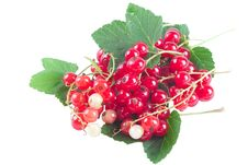 Free Red Currant Royalty Free Stock Images - 20138259