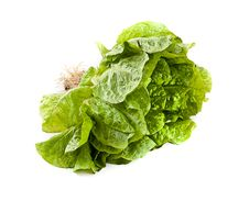 Free Lettuce Royalty Free Stock Images - 20138429