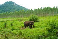 Free Elephant Royalty Free Stock Photography - 20138567