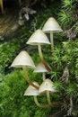 Free Mushrooms In Moss Stock Photo - 20140520