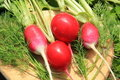 Free Radishes And Greens On A Cutting Board Stock Image - 20143651