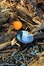 Free Broken Egg Forest Birds Royalty Free Stock Photo - 20149675
