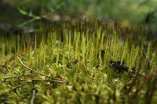 Free Moss Stock Photo - 20141250