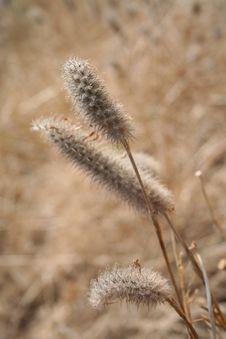 Free Dry Grass Stock Photo - 20141550