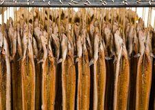 Eel Stock Photo