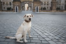 Free Dog In Front Of The Castle Stock Photography - 20142312