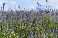 Flourishing Field Stock Images