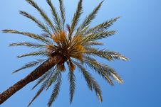 Free Palm Tree Royalty Free Stock Photos - 20143598