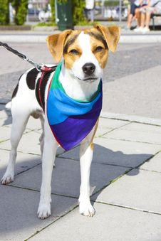 Free Pet Dog With A Rainbow-colored Cloth Royalty Free Stock Images - 20144669
