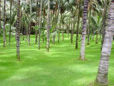 Free A Tropical Palm Grove Stock Image - 20145011