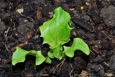 Fresh Green Salad Vitamin Royalty Free Stock Images