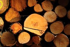 Free Felled Trees Royalty Free Stock Photos - 20146618