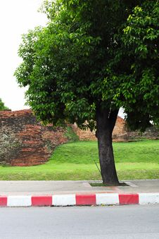 Free Big Trees And Old Walls Royalty Free Stock Image - 20146646