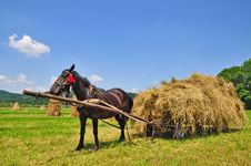 Free Hay Preparation Royalty Free Stock Photo - 20147225