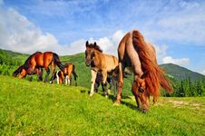 Free Horse On A Summer Pasture. Royalty Free Stock Images - 20147299