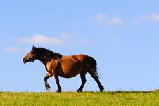Free Horse Royalty Free Stock Photo - 20147435