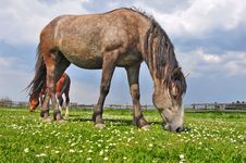 Free Horses On A Summer Pasture Stock Images - 20147664