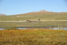 Free Landscape In Mongolia Royalty Free Stock Photography - 20147977