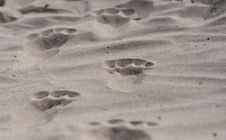 Free Footstep Royalty Free Stock Images - 20149359