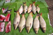 Fresh Fish Fresh Market Stock Image