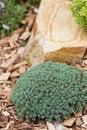 Free Rock Garden Royalty Free Stock Photo - 20154885