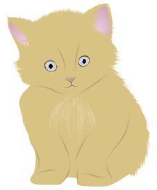 Free Cat (kitten) Stock Photography - 20150842