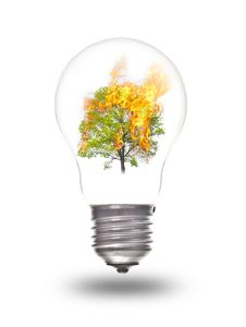 Light Bulb With Burning Tree Inside Royalty Free Stock Images