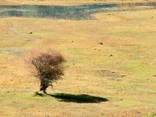 Free Young Trees Royalty Free Stock Images - 20152889