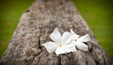 Free Two White Flowers Stock Photos - 20153763