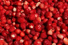 Free Wild Strawberry Stock Photography - 20154332
