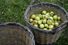 Free Fresh Green Apples In Basket Stock Image - 20154661