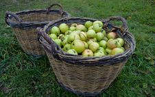 Free Fresh Green Apples In Basket Royalty Free Stock Photography - 20154677