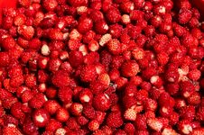 Free Forest Berries Stock Photography - 20154732