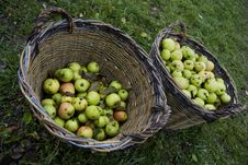 Free Two Baskets With Fresh Green Apples Stock Photos - 20154733