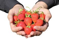 Free Strawberries Royalty Free Stock Image - 20154766