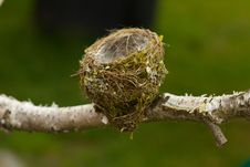 Free Nest Stock Photos - 20154803