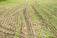 Free Field Royalty Free Stock Images - 20154899