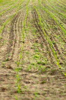 Free Field Stock Images - 20154924