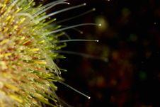 Free Sea Urchin Feet (podia) Royalty Free Stock Image - 20156776