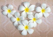 Free Lan Thom White Flowers. Royalty Free Stock Photo - 20156915