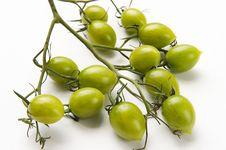 Mini Tomato Stock Photography