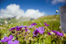 Free Flowers In Mountains Royalty Free Stock Photos - 20159488