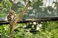 Free Red Kite Bird Milvus Milvus Stock Images - 20167474